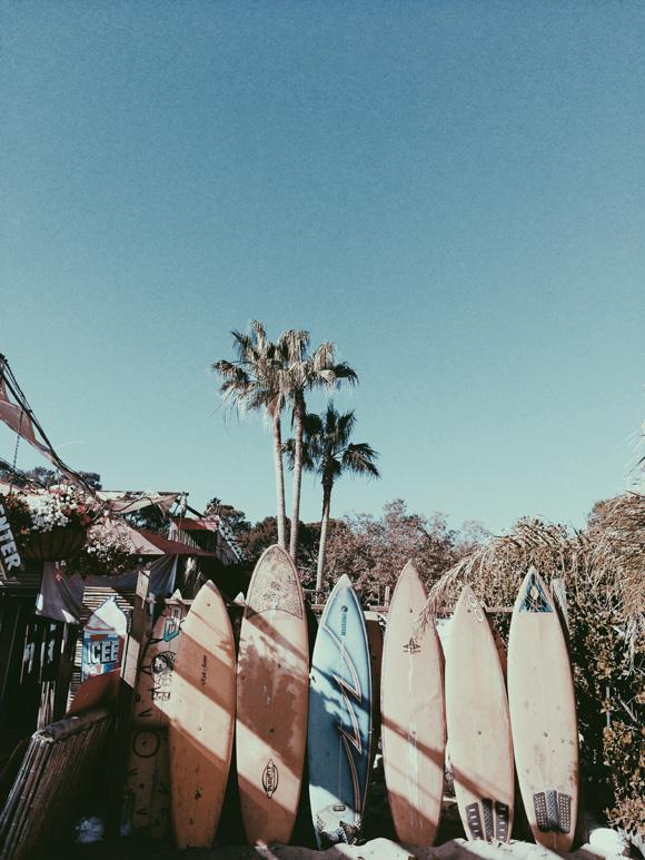Palm Trees Tumblr Vintage Surf U0026 Sun